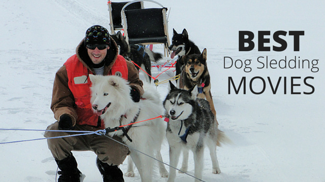 25 best dog sledding movies of all time   wesley banks