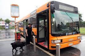 caocao-dog-bus